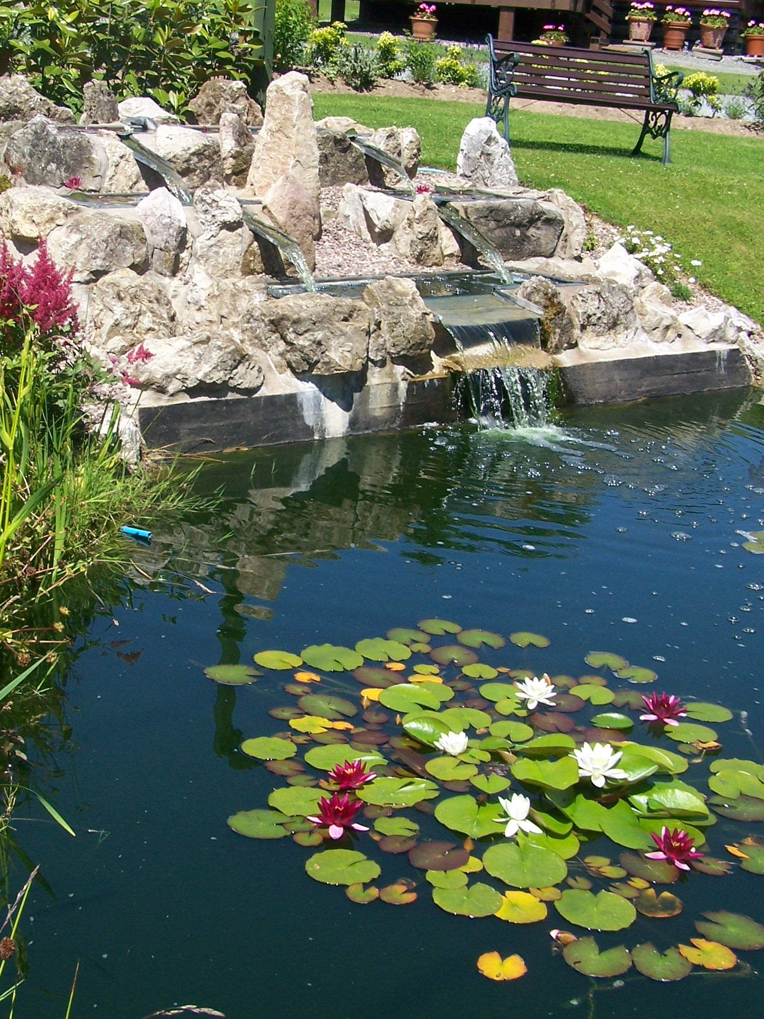 Lilly_Pads_2